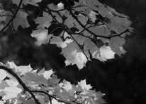 Herbst, Oktober, Licht, Schatten