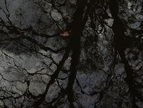 Wasser, Dunkel, Baum, Spiegelung