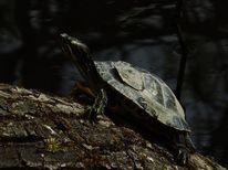 See, Schildkröte, Licht, Augenblick