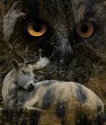 Augen, Wild, Wesen, Fotografie