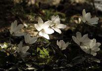 Licht, Zart, Frühling, Weiß