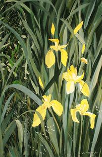 Teich, Iris, Blumen, Gelb