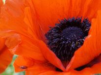 Blüte, Pflanzen, Wiese, Natur