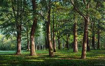 Wald, Ölmalerei, Ölfarben, Gras
