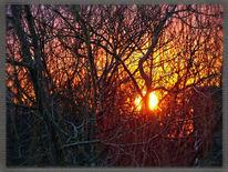 Sonnenuntergang, Weide, Äste, Fotografie