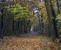 Baum, Weg, Herbst, Laub