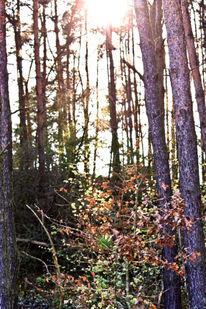 Fotografie, Natur, Wald