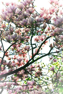 Sonne, Blüte, Baum, Frühling