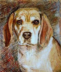 Hund, Skizze, Kreide, Tiere