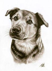 Hund, Zeichnung, Hundeblick, Portrait
