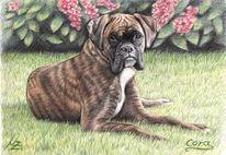 Hund, Portrait, Haustier, Tiere