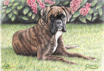 Boxer, Hund, Tiermalerei, Hundeportrait