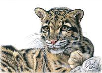 Realismus, Leopard, Katze, Fellzeichnung