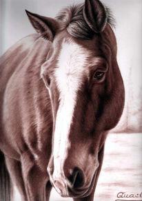 Pferde, Tiermalerei, Braun, Pferdeportrait