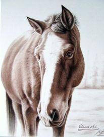 Pferde, Pferdeportrait, Tiere, Braun