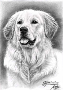 Gold, Tierportrait, Haustier, Retriever