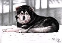 Kohlezeichnung, Zeichnung, Malamute, Schlittenhund