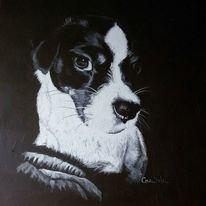 Russel, Mix hund portrait, Tiere, Stillleben