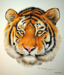 Sibirischer tiger, Aquarell, Tiger