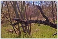 Wald, Natur, Baum, Wild