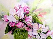 Baumblüte, Frühling, Blüte, Apfelblüten