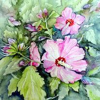 Eibisch, Garteneibisch, Blütenstrauch, Aquarell