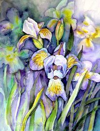 Iris, Blumen, Lilie, Aquarellmalerei