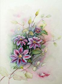 Clematis, Blumen, Aquarell