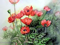 Aquarellmalerei, Mohn, Blumen, Mohnblumen