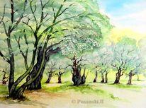 Olivenbaum, Baum, Aquarellmalerei, Aquarell