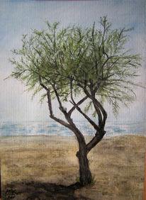 Sommer, Strand, Baum, Cavallino