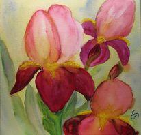 Iris, Aquarellmalerei, Blumen, Pflanzen
