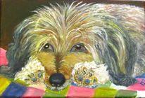 Tiere, Ohr, Hundeportrait, Weiß