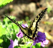 Blumen, Schmetterling, Sonne, Tiere