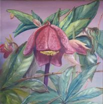 Flora, Christrose, Blumen, Blüte
