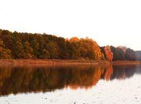 Wentowsee, Herbst, Spiegelung, Baum