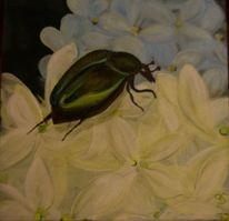Hortensien, Fauna, Käfer, Blüte
