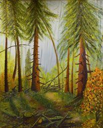 Nadelbäume, Blätter, Waldleuchten, Lichtung