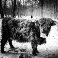 Kuh, Landschaft, Schwarzweiß, Fotografie
