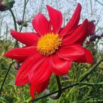 Fotografie blume landschaft, Landschaft fotografie berlin, Reise, Blumen