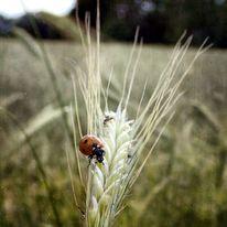Tiere, Natur, Pflanzen, Sommer