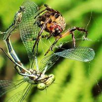 Insekten, Spinne, Fotografie, Natur