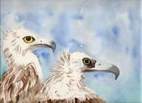 Vogel, Zoo, Tiere, Aquarellmalerei