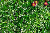 Pflanzen, Blumen, Pink, Grün