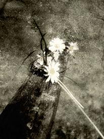 Schatten, Blumen, Grau, Fotografie