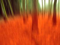 Wald, Linie, Natur, Schuss