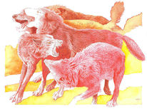 Wolf, Canis lupus, Rot, Illustrationen