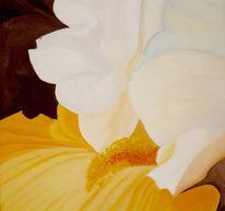 Realismus, Iris, Garten, Gelb