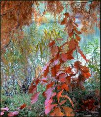 Fotografie, Herbst, Stimmung