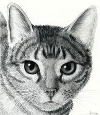 Zeichnen, Katze, Fell, Haustier